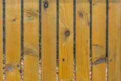 木范围在公园 免版税图库摄影