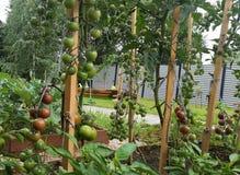 木菜床用蕃茄和胡椒在根据有机耕田的原则装备的庭院里 免版税库存照片