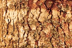 木董事会纹理 与表面木样式难看的东西的抽象种族分界线背景 自由空间和例证为修饰 免版税库存照片
