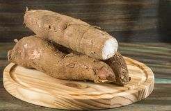 木薯未加工的肿胀- esculenta的木薯 免版税库存照片