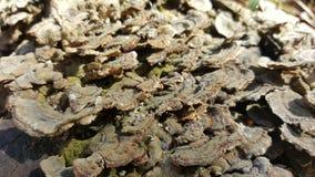 木表面上的真菌 库存图片