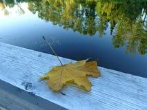 木表面上的黄色干枫叶在湖附近 库存照片
