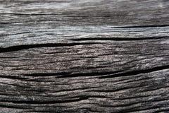 木表面,木背景,木地板,树 库存图片