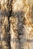 木表面 免版税库存照片