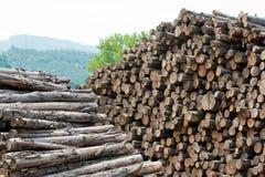 木被堆积的树桩 图库摄影