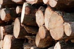 木被堆积的树桩 库存照片