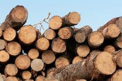 木被堆积的树桩 免版税图库摄影