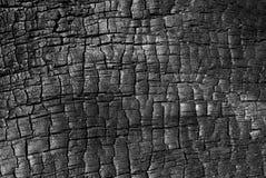 木被烧的纹理 免版税库存照片