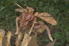 木被雕刻的昆虫 库存照片