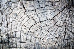 木详细资料。 老木材被找出的室外 免版税库存照片