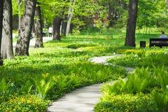 木走道在春天莫斯科植物园的公园 免版税库存照片