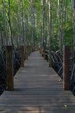 木走道在美洲红树森林里 图库摄影