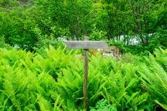 木足迹签到挪威森林 免版税图库摄影