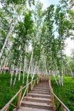木路在夏天森林里 库存图片