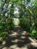 木路在森林里 免版税库存照片