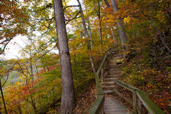 木路径在秋天的森林里 库存照片