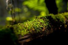木路扶手栏杆的绿色青苔植物与阳光 免版税库存图片