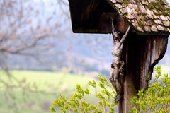 木路边十字架 免版税库存照片