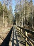 木道路在森林,立陶宛里 免版税图库摄影
