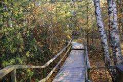 木道路在秋天森林里 免版税库存图片