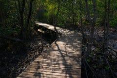 木道路在美洲红树森林里 库存图片