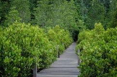 木道路在美洲红树森林里 免版税库存照片