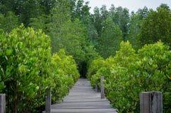 木道路在美洲红树森林里 图库摄影