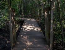 木道路在黑暗的美洲红树森林里 图库摄影