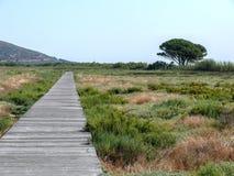木道路穿过在Stagno Longu di Posada附近的沼泽地 图库摄影