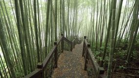 木道路穿过有薄雾的竹绿色森林在远足区域,瑞泰历史的足迹的阿里山在台湾 影视素材