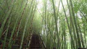 木道路穿过有薄雾的竹绿色森林在远足区域,ruitai历史的足迹的阿里山在台湾 影视素材