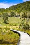 木道路穿过沼泽地陷入沼泽本质上在好日子,与在距离的树 免版税库存图片