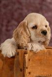 木配件箱的小狗 免版税库存图片