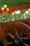 木酒桶的郁金香 免版税库存图片