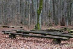 木长凳在秋天森林里 库存图片