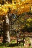 木长凳的公园 免版税图库摄影