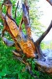 木雕象 库存图片