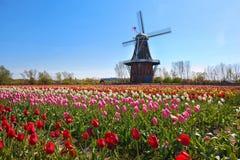 木风车在荷兰密执安 免版税库存照片