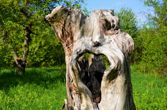 木鬼魂 库存照片