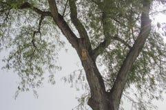 木鸟房子 免版税库存图片