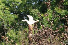 木鸟 免版税图库摄影