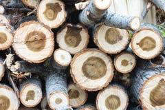 木头削减自然葡萄酒背景 库存图片