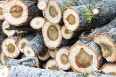 木头削减自然葡萄酒背景 库存照片