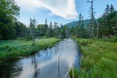 木头包围的河 免版税库存照片
