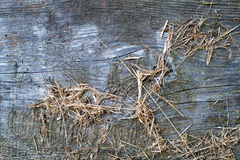 木头和干草纹理 免版税库存图片