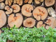 木头和植物 图库摄影
