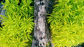 木头和草 免版税库存图片