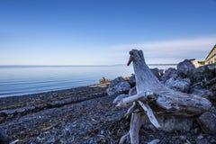 木头在一个多岩石的海滩的在一个海湾在一个晴天,魁北克加拿大 库存图片
