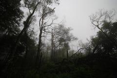木头在冬天 库存图片