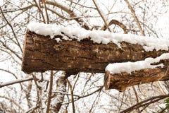 木头在冬天 图库摄影
